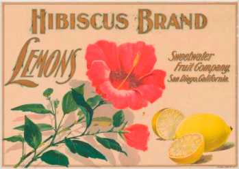 This is a beautiful trademark with a lovely reddish/pink hibiscus featured in the center. The words Hibisuc Brand are across the top of the trademark, while the word Lemons in on the left of the flower and the words sweetwater fruit company, san diego, california are on the right. In the lower right corner are two bright yellow lemons, one cut in half.